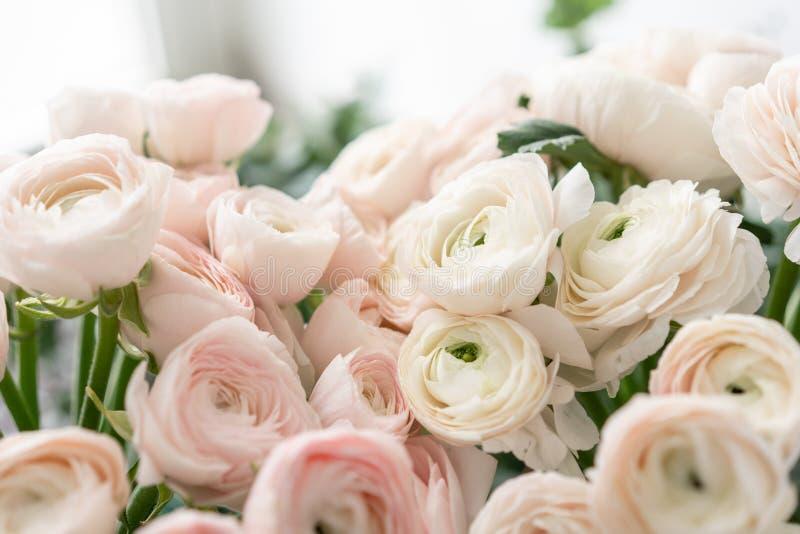 Botão de ouro persa nos vasos de vidro Grupo pálido - o ranúnculo cor-de-rosa floresce o fundo claro wallpaper Flores da estação  fotos de stock