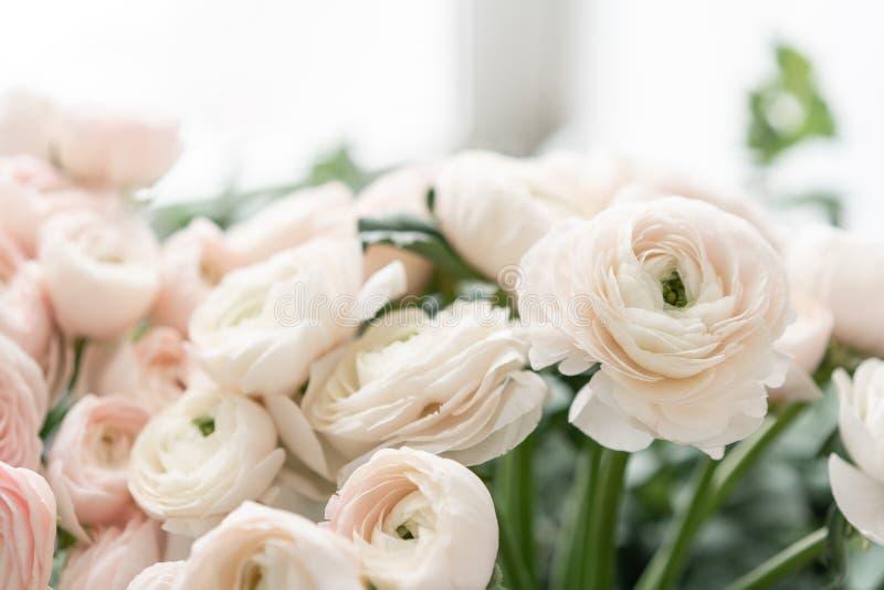 Botão de ouro persa nos vasos de vidro Grupo pálido - o ranúnculo cor-de-rosa floresce o fundo claro wallpaper Flores da estação  fotografia de stock
