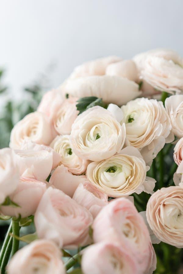 Botão de ouro persa nos vasos de vidro Grupo pálido - o ranúnculo cor-de-rosa floresce o fundo claro wallpaper Flores da estação  fotografia de stock royalty free