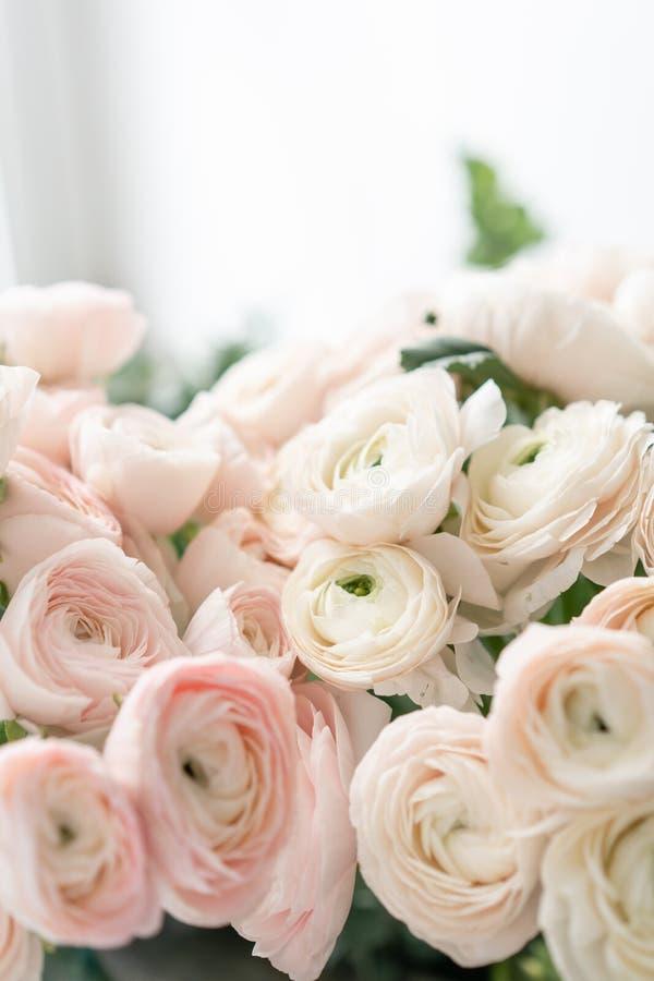 Botão de ouro persa nos vasos de vidro Grupo pálido - o ranúnculo cor-de-rosa floresce o fundo claro wallpaper Flores da estação  imagem de stock