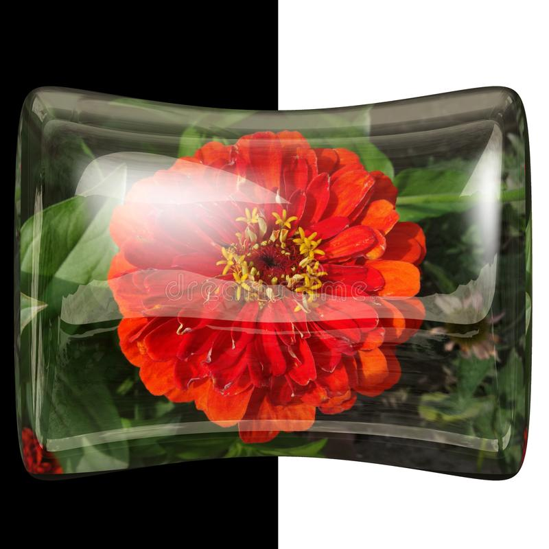 botão lustroso do descanso 3D com flor real fotos de stock royalty free