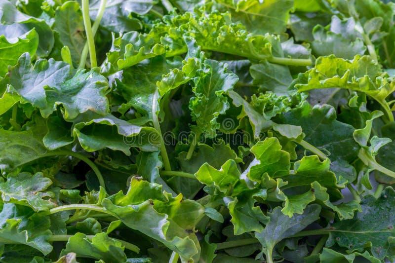 Botões da couve da couve Salada com um aspecto rústico imagem de stock royalty free