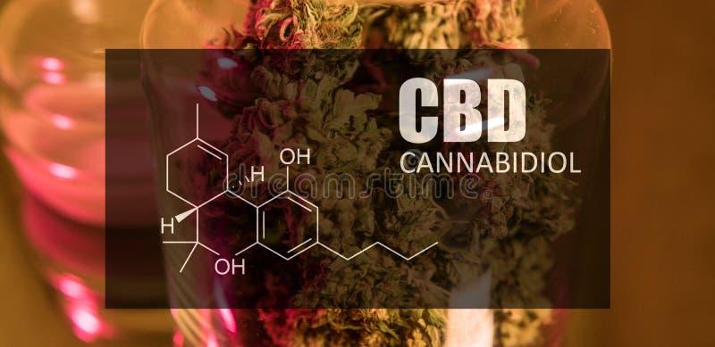 Botões da marijuana do cannabis com a imagem do cannabidiol da fórmula CBD foto de stock royalty free