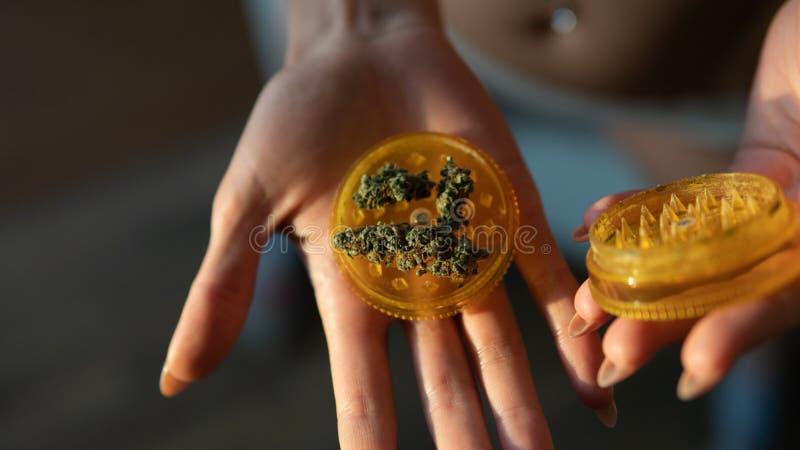 Botões de moedura da marijuana nas mãos da mulher Botões grandes plásticos do moedor & do cannabis foto de stock royalty free