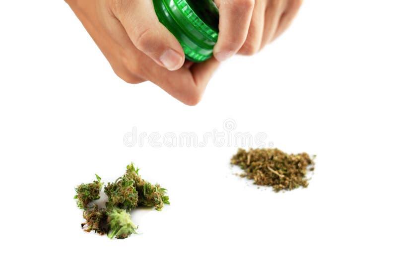 Botões de moedura do cannabis pelo moedor erva daninha de fumo de moedura em um isolado branco do fundo foto de stock royalty free