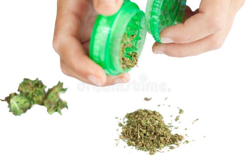 Botões de moedura do cannabis pelo moedor erva daninha de fumo de moedura em um isolado branco do fundo fotos de stock royalty free