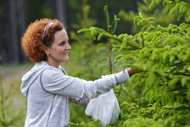 Botões do abeto da colheita da mulher imagem de stock