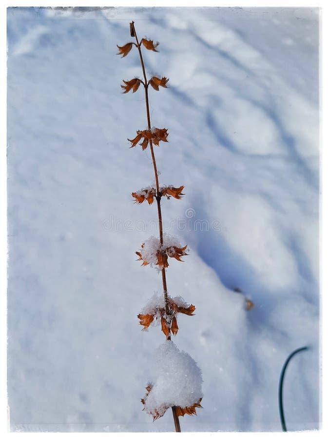 Botões do inverno imagem de stock royalty free