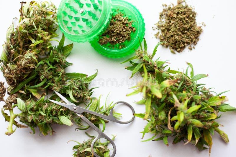 Botões secos e frescos da marijuana com moedor e tesouras em um fundo branco, aparando a marijuana dos botões imagens de stock royalty free