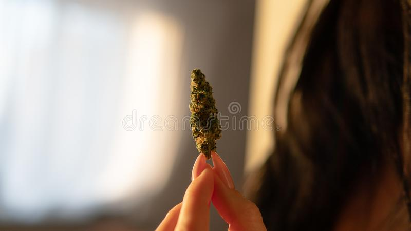 Bot?es do cannabis e trichomes CBD THC fotos de stock