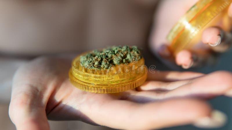 Bot?es do cannabis e trichomes CBD THC imagem de stock royalty free