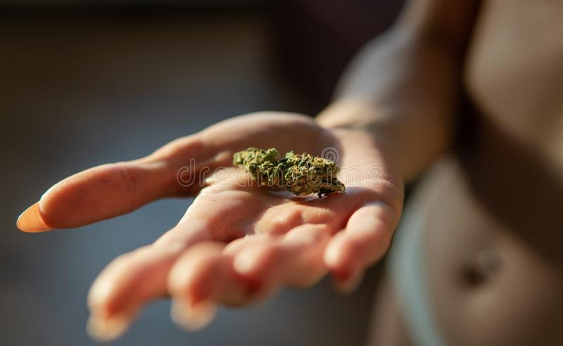 Bot?es do cannabis e trichomes CBD THC fotografia de stock royalty free
