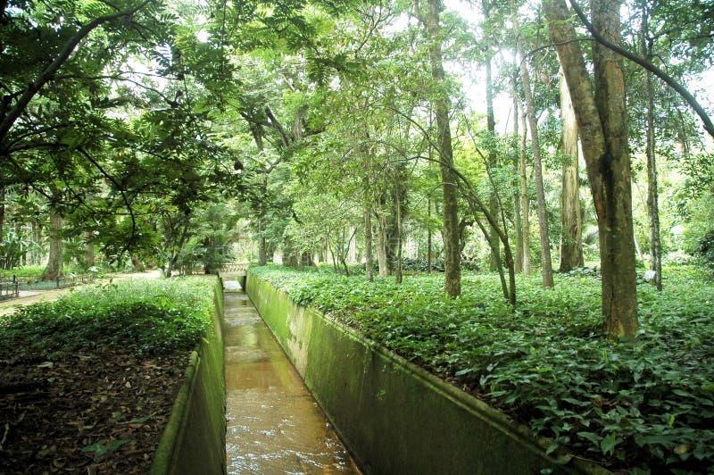 Botanic. Garden, Rio de Janeiro, Brazil stock photo