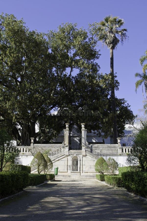 Free Botanic Garden In Coimbra Royalty Free Stock Photo - 18952435