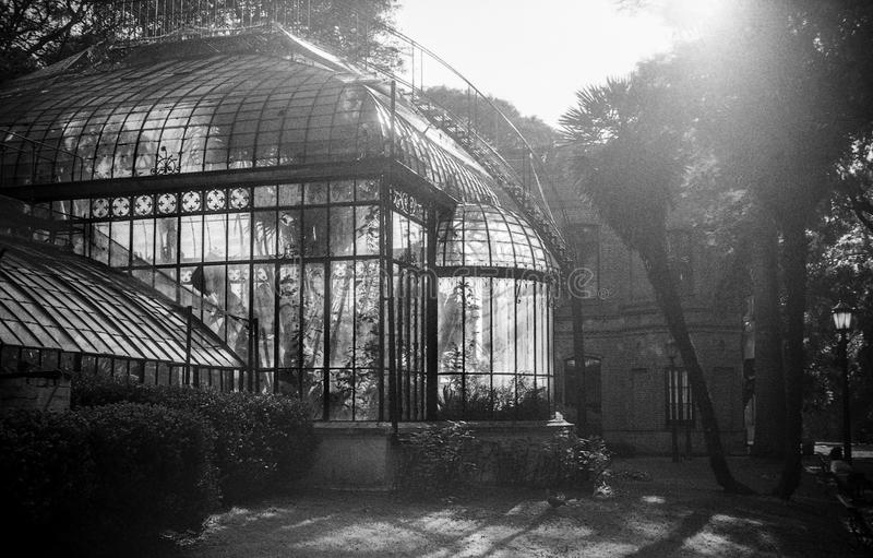 Botanic garden with sun backlight in black and white. Botanic garden with sun backlight in Palermo, Buenos Aires, Argentina. Analog black and white photography royalty free stock photo