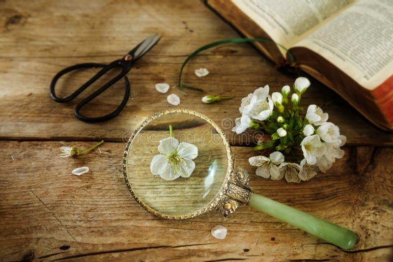Botanica, fiore di ciliegia, forbici, lente d'ingrandimento e un libro sopra fotografia stock libera da diritti