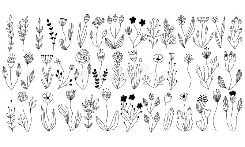 Vector botanical collection of floral and herbal elements. isolated vector plants, branches and flowers in ink sketch design. Linear vector botanical collection stock illustration