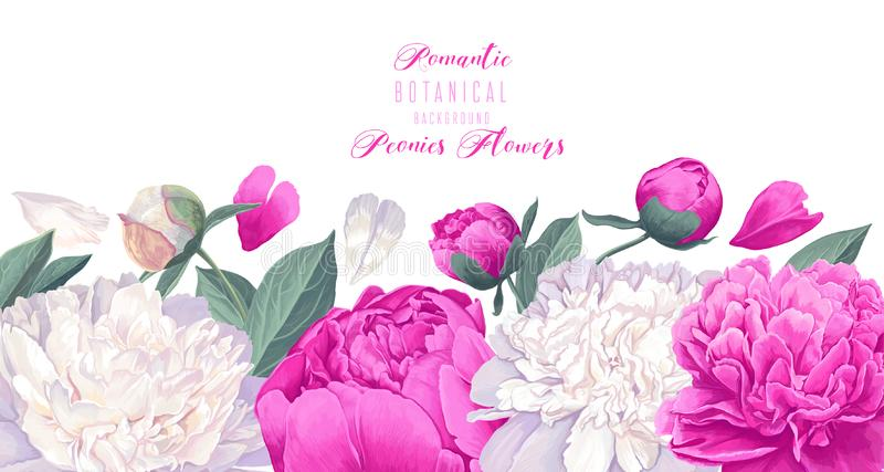 Vector horizontal border with white and pink peonies flowers on white background. stock illustration