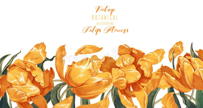 Vector horizontal border with yellow tulips flowers and leaves on white background. stock illustration
