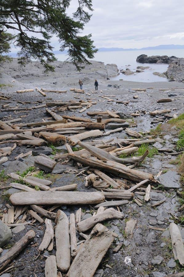 Download Botanical beach stock image. Image of coast, life, beach - 14815661