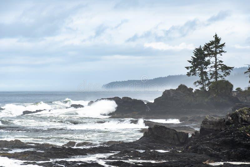 Botanical Beach, Port Refrew, Vancouver Island royalty-vrije stock afbeelding