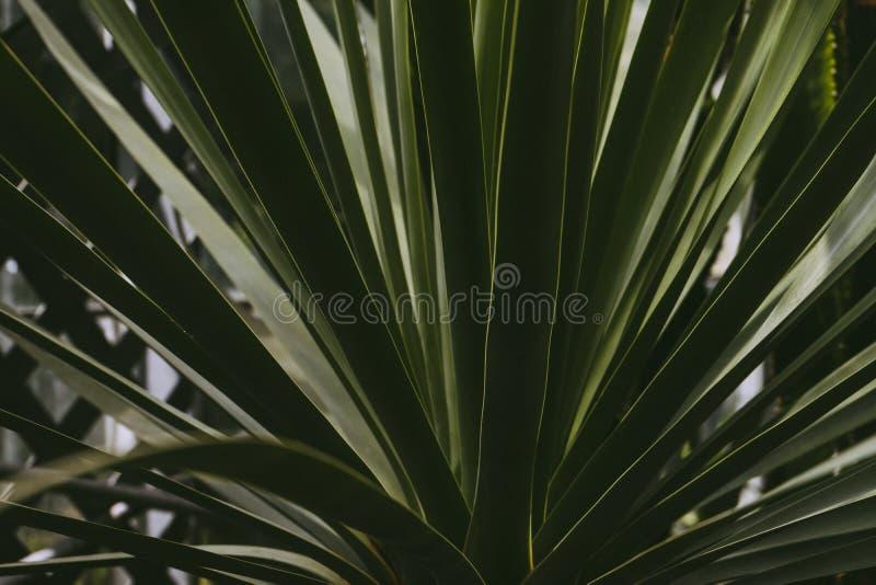 Botanical, Bright, Cactus Free Public Domain Cc0 Image