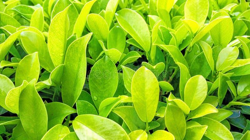 Botanical, Bright, Close-up stock images