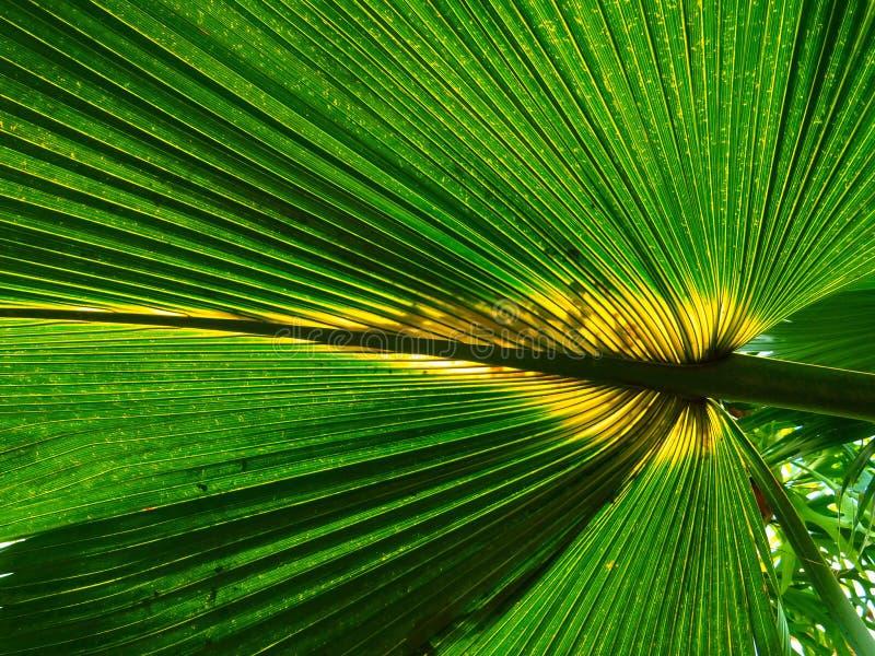 Botanical, Bright, Close-up stock photography