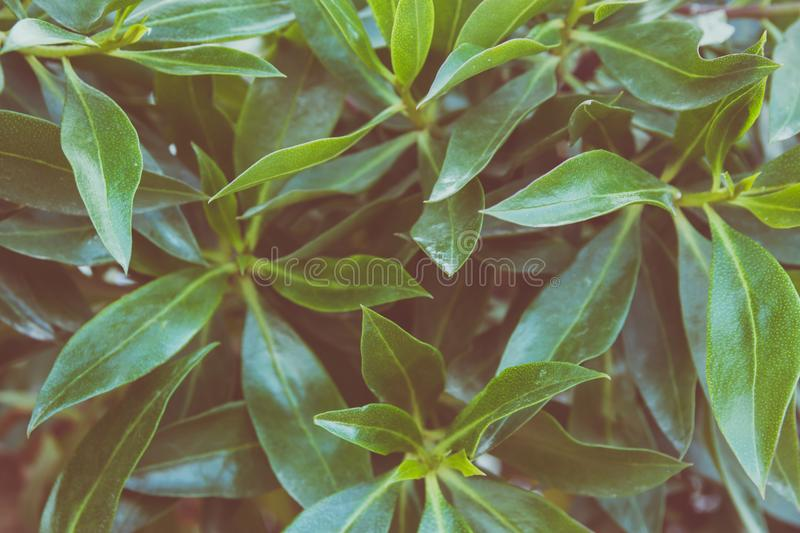 Botanical Foliage Background of Bush Leaves Pattern. Vibrant Green Yellowish Colors. Trendy Hipster Style Matte Effect. Template for Poster Banner. Fashion stock photo