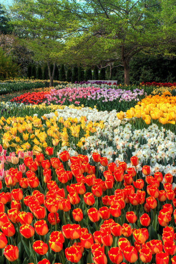 Botanical Garden. A colorful Botanical Tulip Garden in spring royalty free stock image