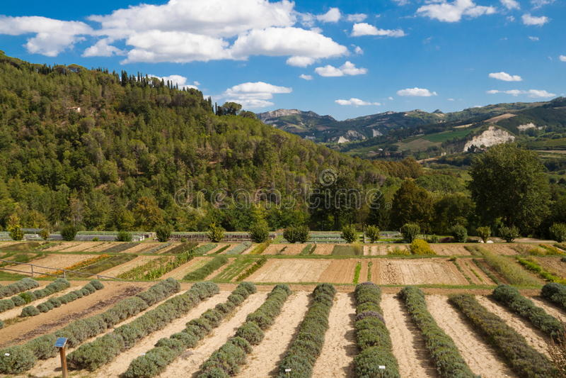 Download Botanical Garden stock photo. Image of lavender, herbs - 26845482