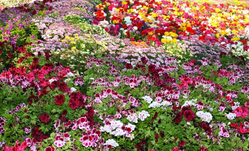 Botanical garden. Beautiful botanical garden with varieties of flowers stock images