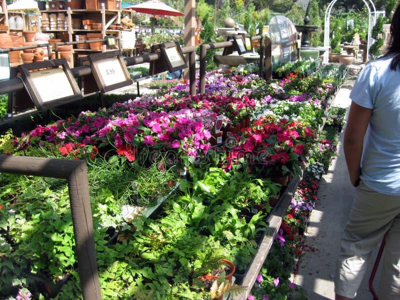 Download Botanical Garden Centers, Claremont, California, USA Editorial  Image   Image Of Claremont