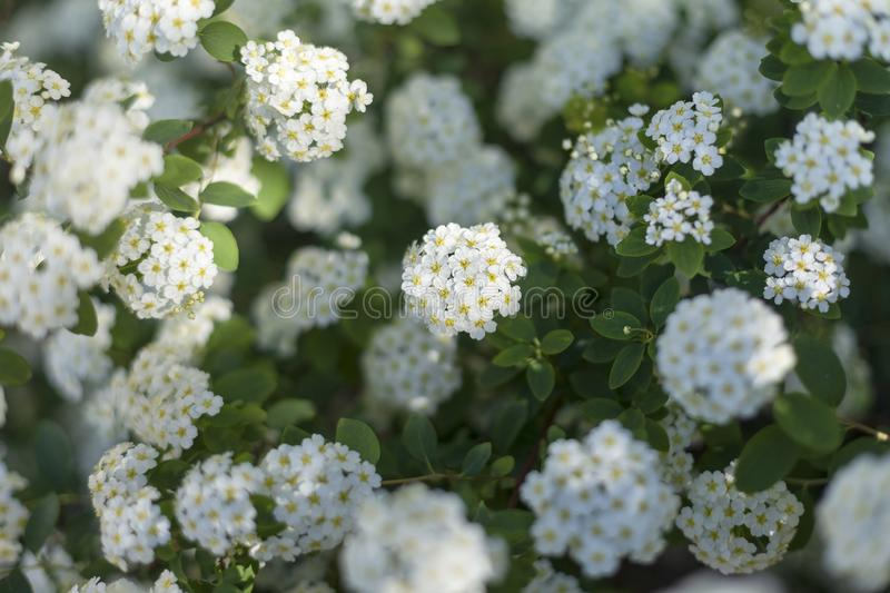 White Flowers in a Botanical Garden 3 royalty free stock photography