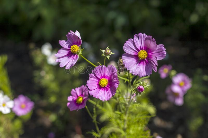 Purple Wild Flowers in a Botanical Garden royalty free stock photos