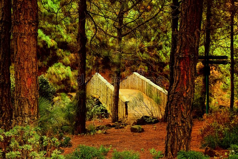 Botanical garden of gran canaria royalty free stock image