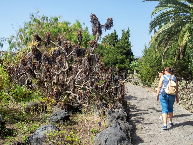 Botanical garden on Gran Canaria. Gran Canaria/Spain - August 9 2019: Jardín Botánico Canario Viera y Clavijo, the full name of the botanical garden on royalty free stock images
