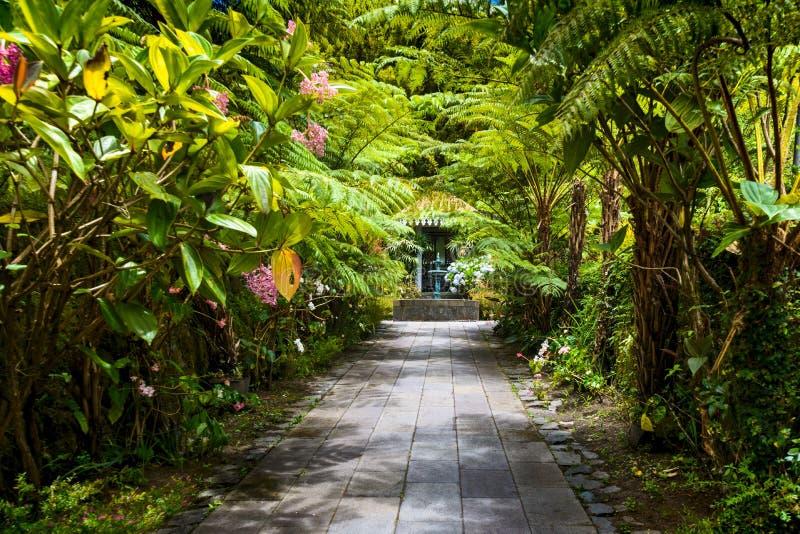 Botanical garden La Maison Folio, Salazie, Reunion Island. Botanical garden called La Maison Folio, Salazie circus at Reunion Island royalty free stock photo