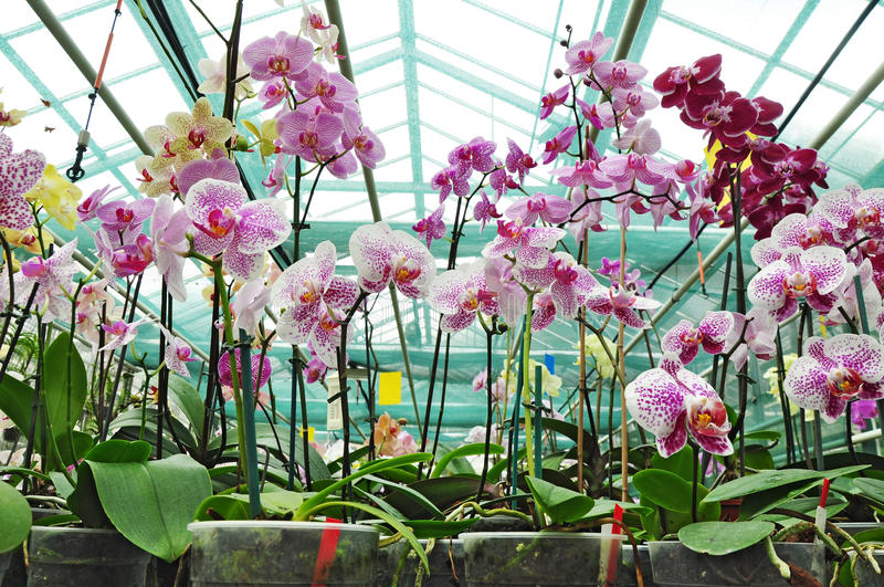 Botanical garden, orchid plants royalty free stock photo
