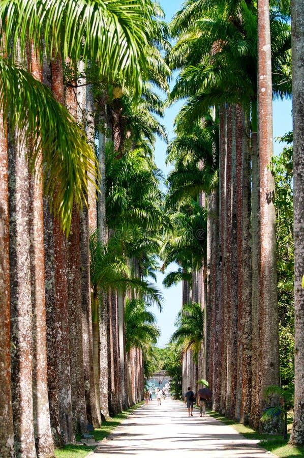 The Botanical Garden in Rio de Janeiro royalty free stock photo