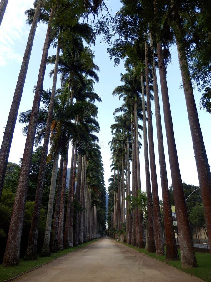 Botanical garden of Rio de Janeiro stock photo
