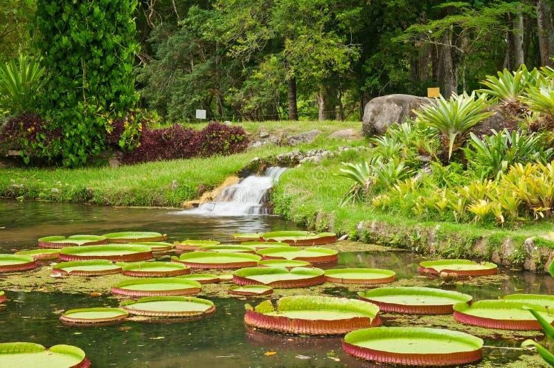 Botanical garden in Rio de Janeiro. Brazil stock image