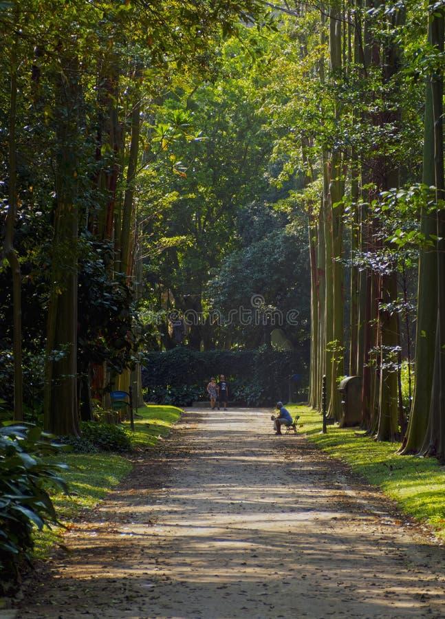 Botanical Garden in Rio de Janeiro royalty free stock photography