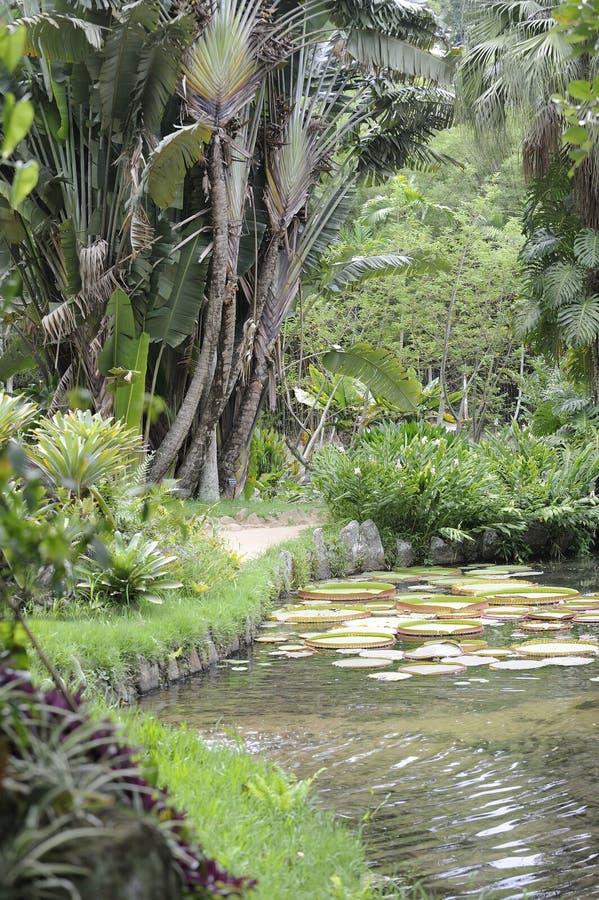 Botanical garden in Rio de Janeiro, Brazil. royalty free stock photo