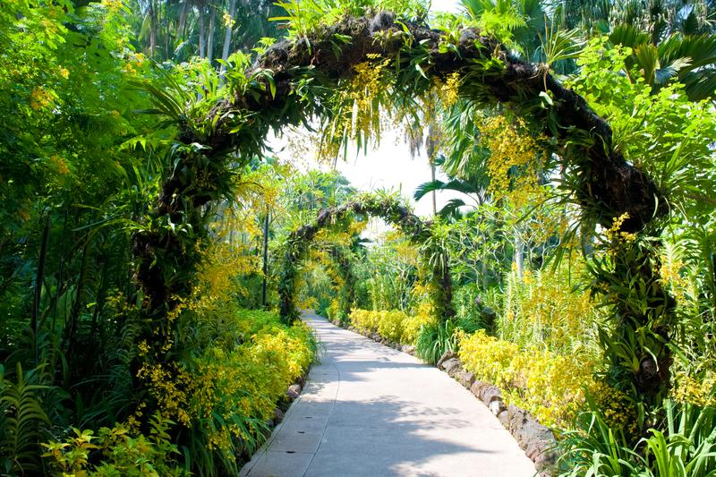 Botanical Garden Singapore, path with blooming small yellow orchids arches in Singapore National Orchid Garden stock photos