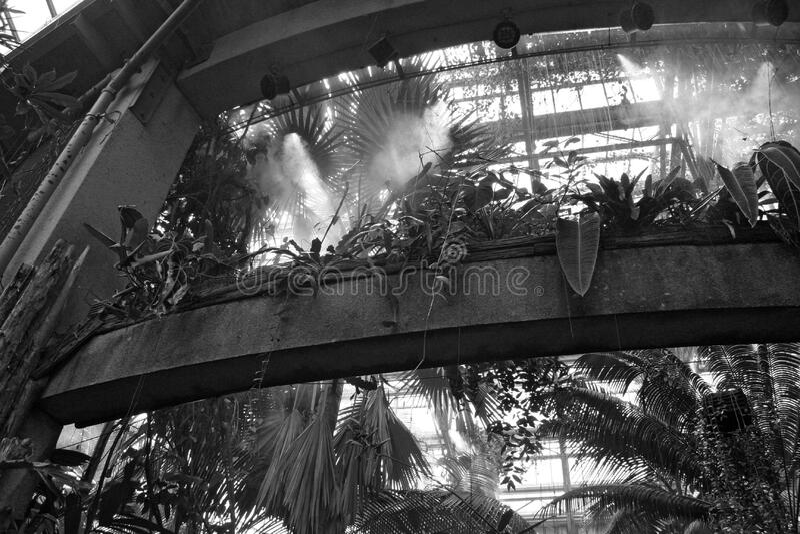 Botanical Garden Steam Free Public Domain Cc0 Image