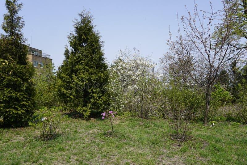 Botanical garden. Vladivostok.  Primorye.  Russia. 2019. royalty free stock photography