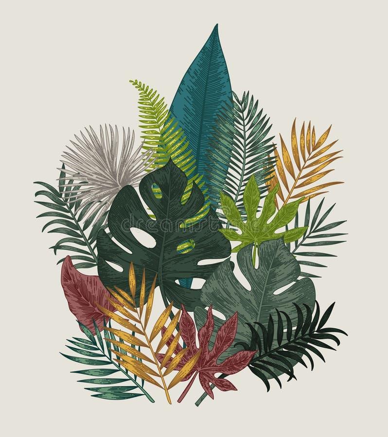 Free Botanical Illustration. Tropical Leaves. Royalty Free Stock Image - 93096476
