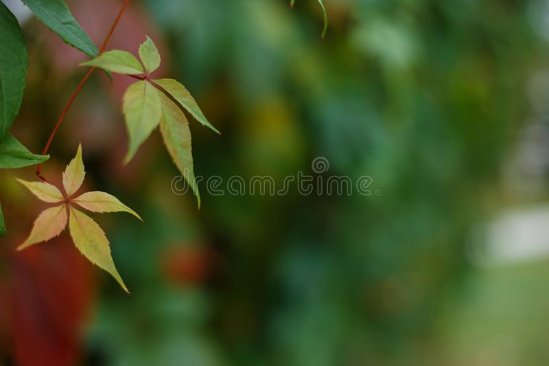 Botanical, nature, gardening background. Autumn leaves picture w stock image