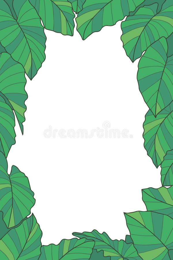 Botanical plant vector frame with green exotic Alocasia Macrorrhizos Giant Taro leaves on transparent background vector illustration